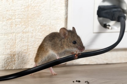 Pest Control in Islington, Barnsbury, Canonbury, N1. Call Now! 020 8166 9746