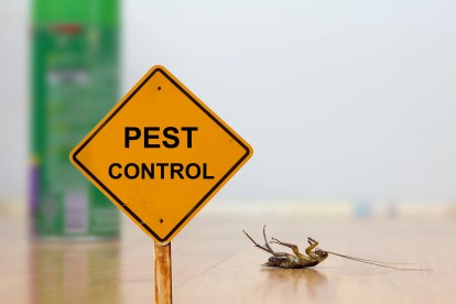 Pest Contol in Islington, Barnsbury, Canonbury, N1. Call Now 020 8166 9746