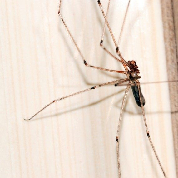 Spiders, Pest Control in Islington, Barnsbury, Canonbury, N1. Call Now! 020 8166 9746